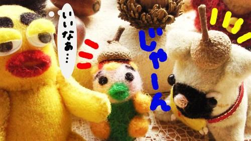 木の実拾い4☆