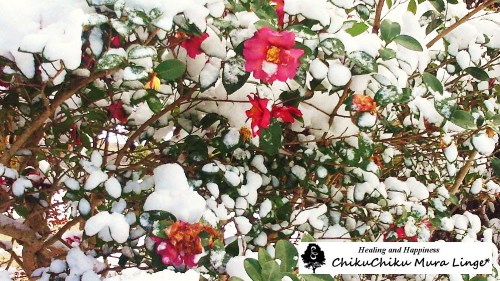 2012年の雪☆