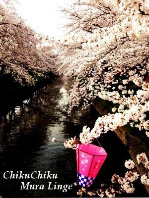 桜祭り17★