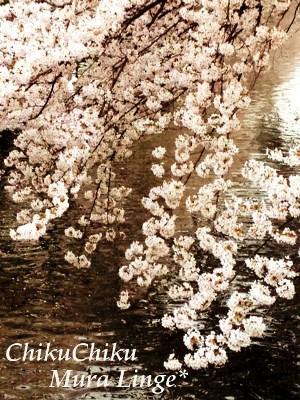 桜祭り18★