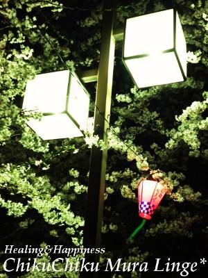 桜祭り8★