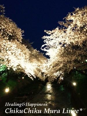 桜祭り7★