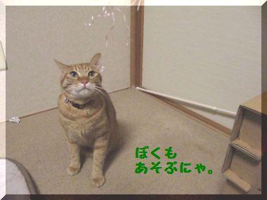 じゃれ猫03