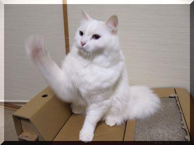 じゃれ猫01