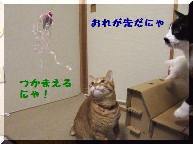 じゃれ猫05