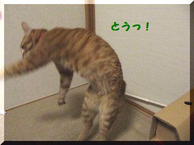 じゃれ猫04