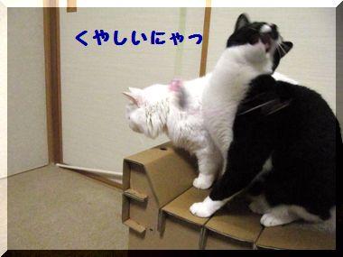 じゃれ猫07