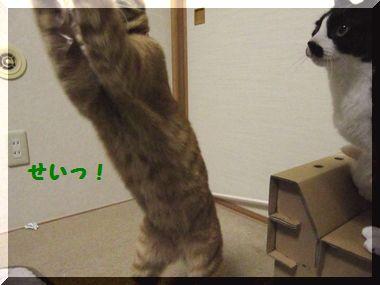 じゃれ猫06