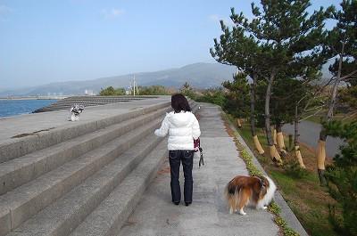楽しくお散歩してました