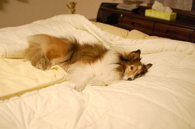 ベッドでひとり2
