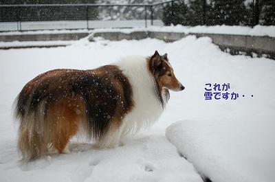 リズと雪2