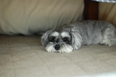 可愛いコタツ犬
