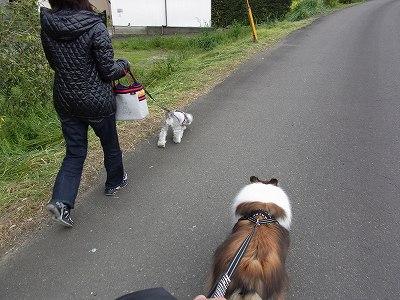 お散歩コース3