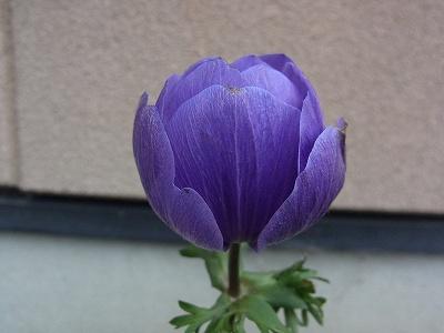 父さんの花