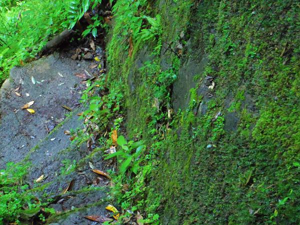 西椎屋の滝4