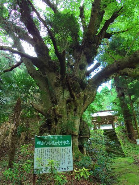 籾山八幡4