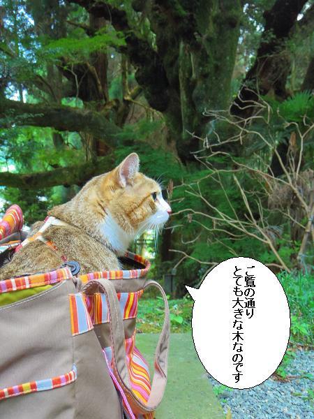籾山八幡10