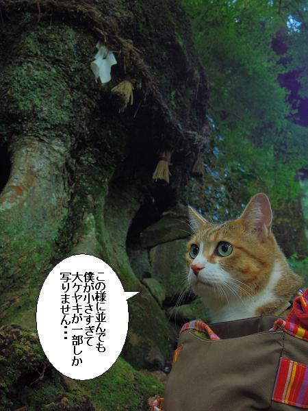 籾山八幡12