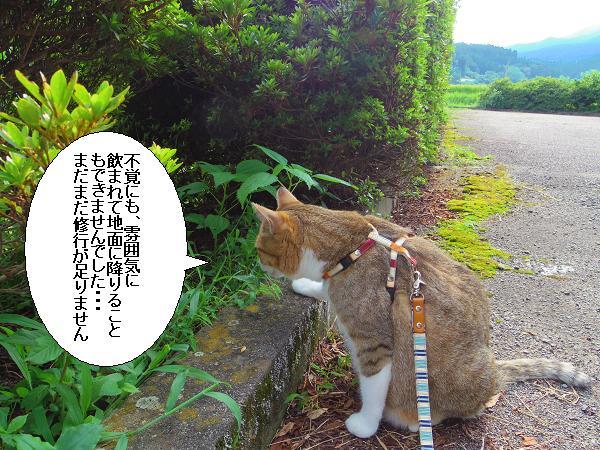籾山八幡19