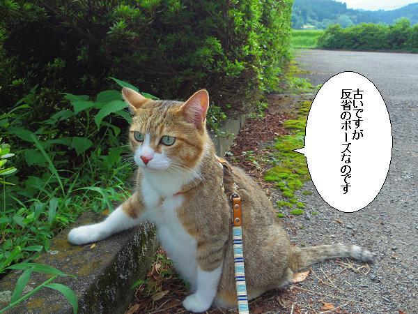 籾山八幡18