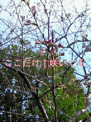桜・4・2 002
