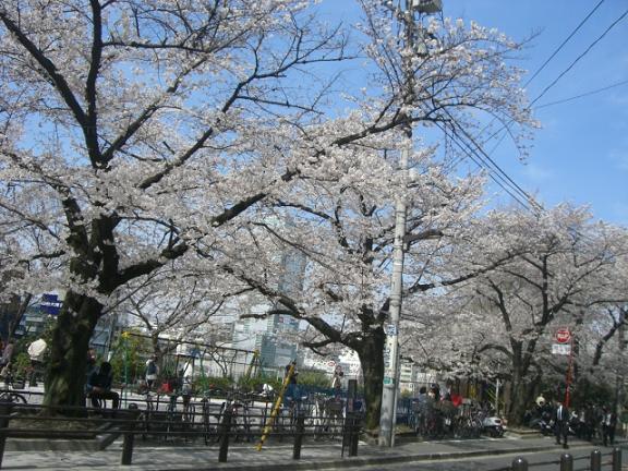 桜4・7 029