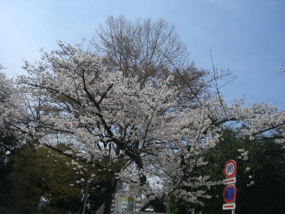 桜4・7 030