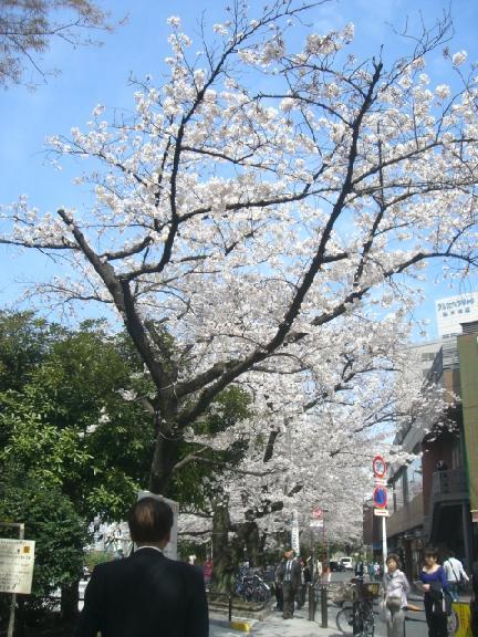 桜4・7 032