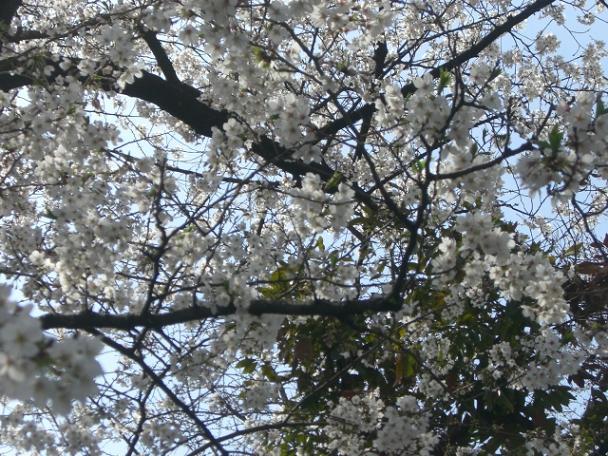 桜4・7 033