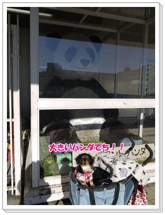 上野ジャイアントパンダと♪