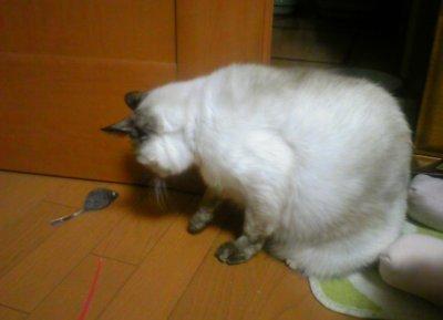 タヌさん~ねずみのおもちゃ