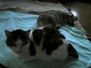 実家の猫さん~ベスさん&タマさん