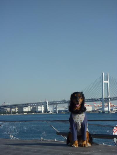2010_01080009.jpg