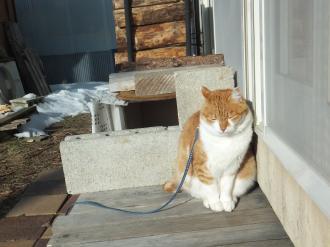 日差しが暖かい