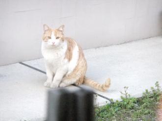 2011-3-29 猫1
