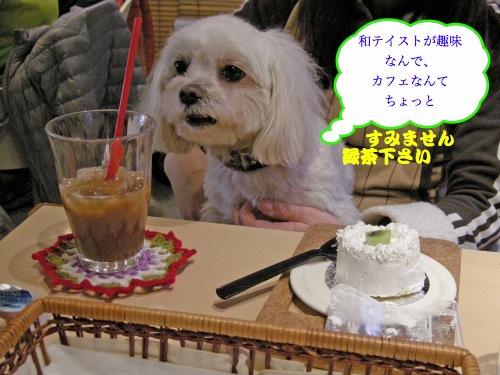 だれか和風ドッグカフェ作って!!