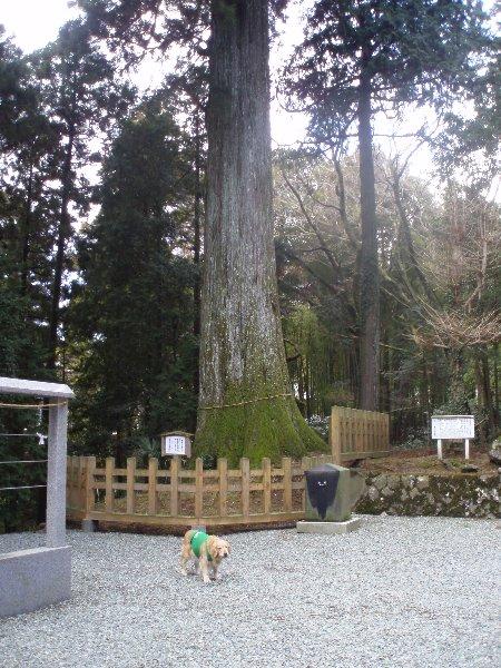 3月26日富士山須山口登山歩道 033