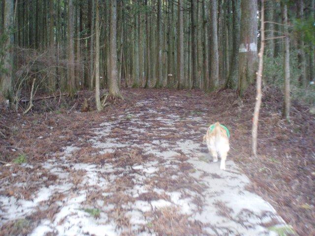 3月26日富士山須山口登山歩道 044