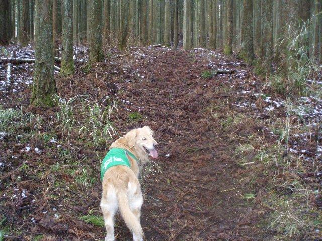 3月26日富士山須山口登山歩道 045