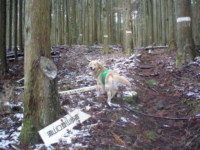 3月26日富士山須山口登山歩道 047