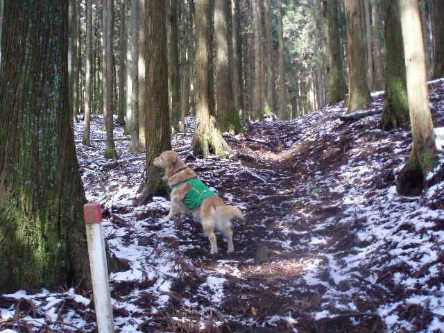 3月26日富士山須山口登山歩道 053