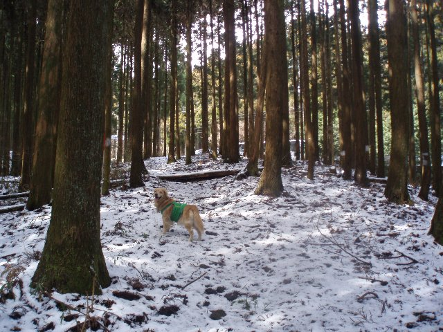 3月26日富士山須山口登山歩道 056