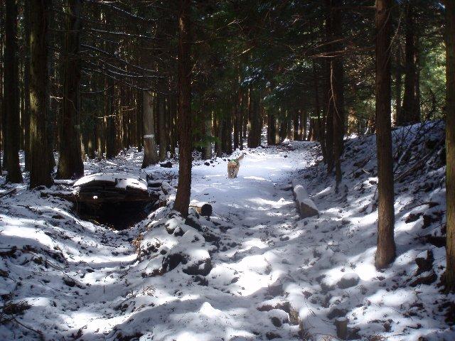 3月26日富士山須山口登山歩道 072