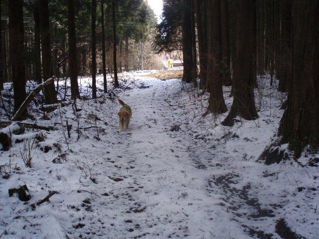 3月26日富士山須山口登山歩道 073