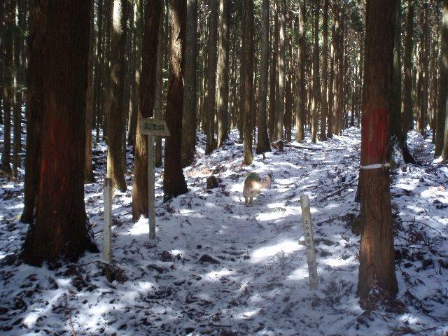 3月26日富士山須山口登山歩道 082