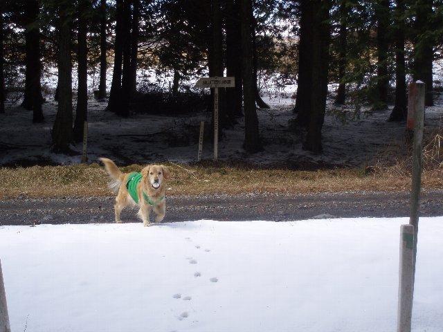 3月26日富士山須山口登山歩道 084