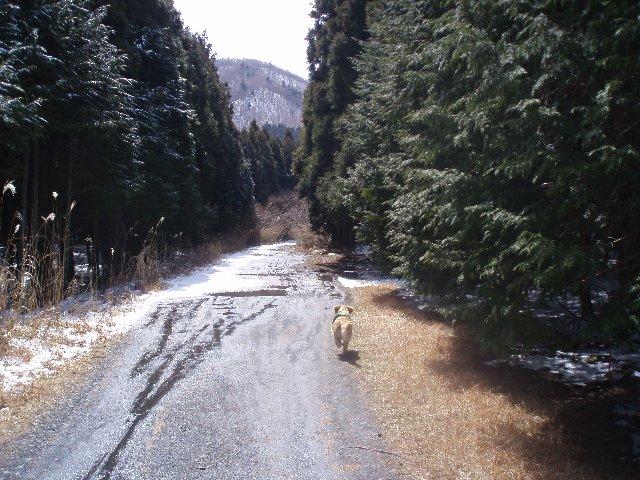3月26日富士山須山口登山歩道 086