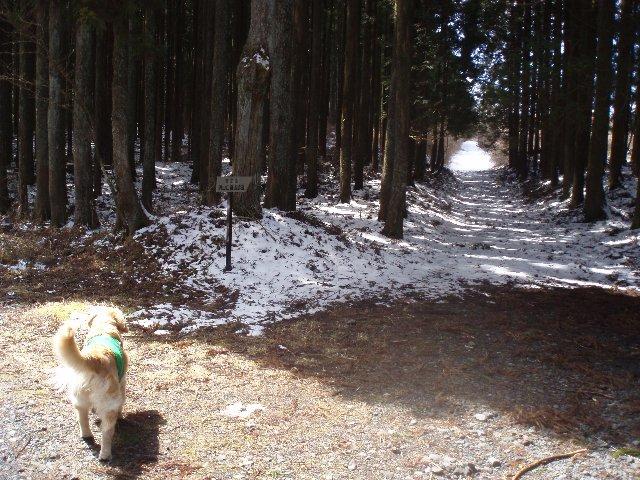 3月26日富士山須山口登山歩道 087