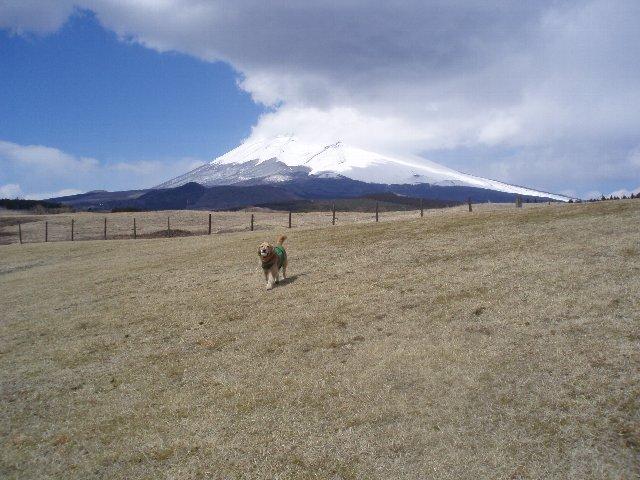 3月26日富士山須山口登山歩道 096