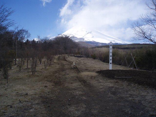 3月26日富士山須山口登山歩道 108